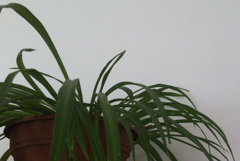 the motherplant
