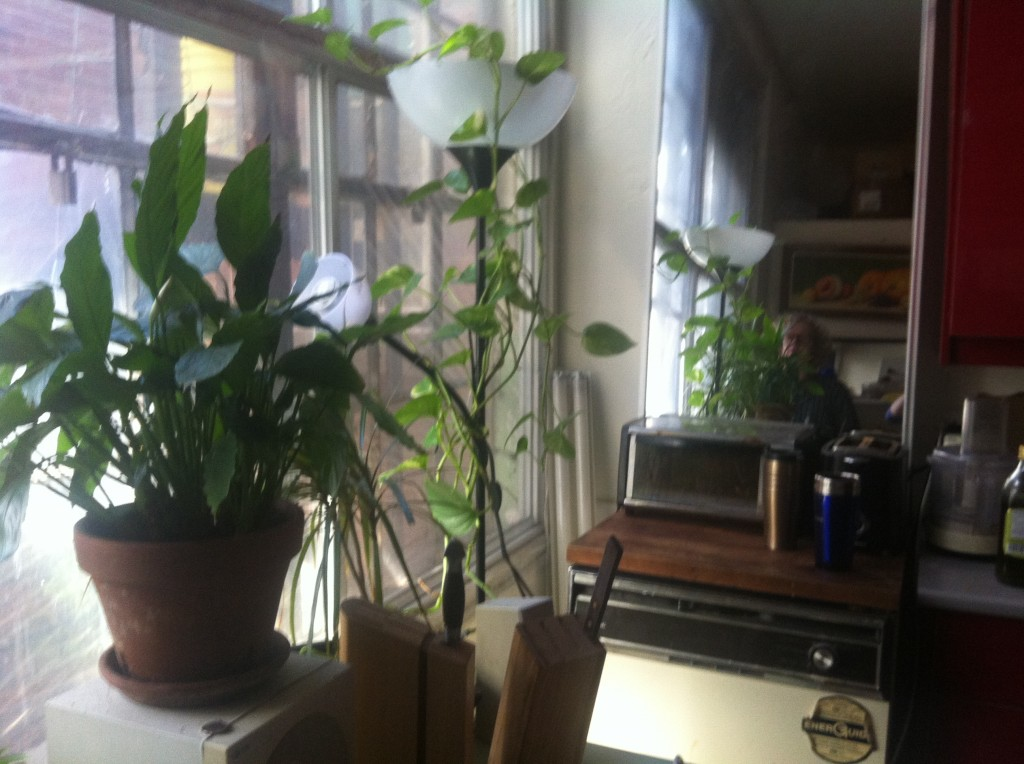 another view of the houseplants