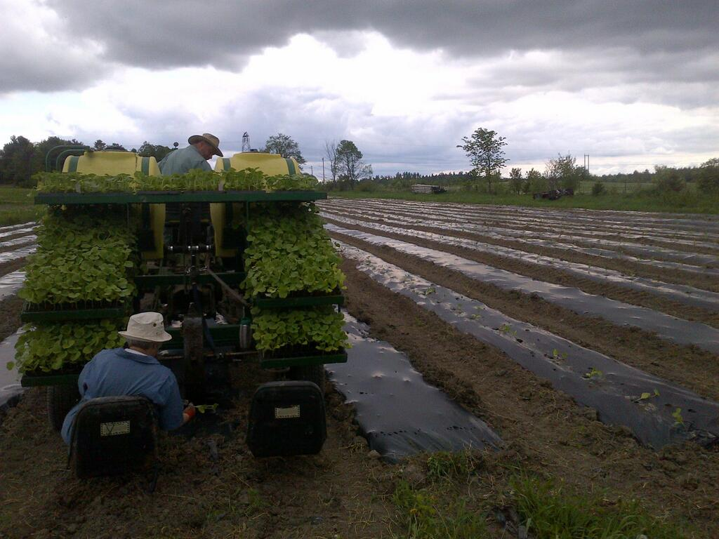 a transplanter in use at another farm