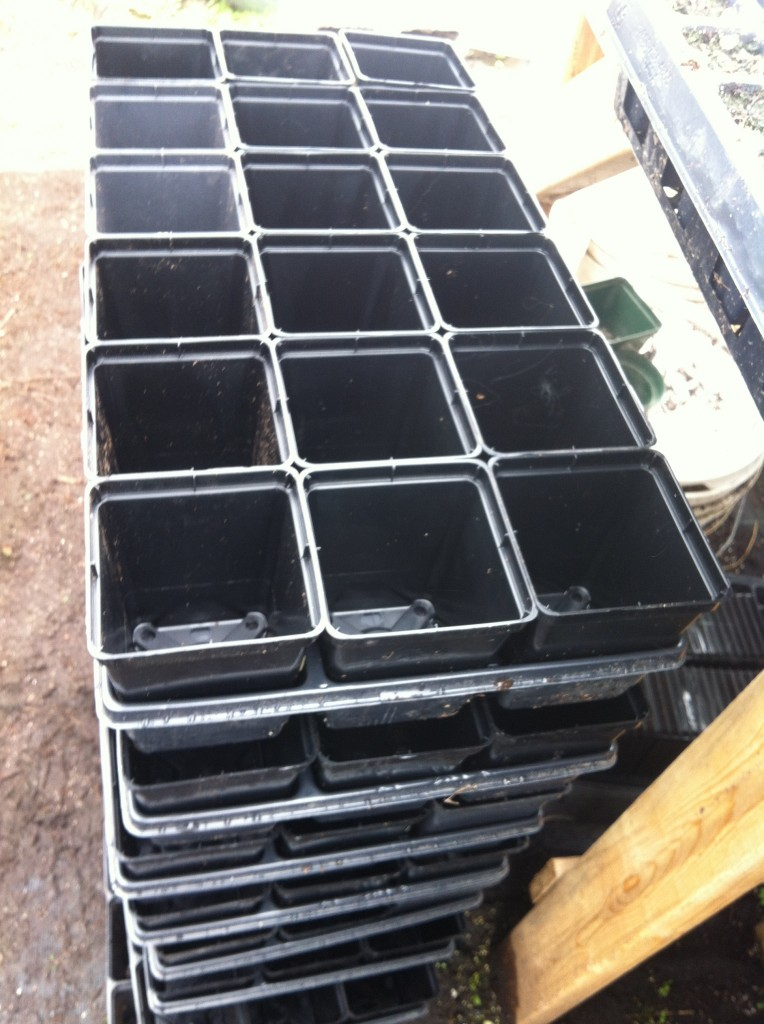 empty trays, waiting to be filled with potting soil