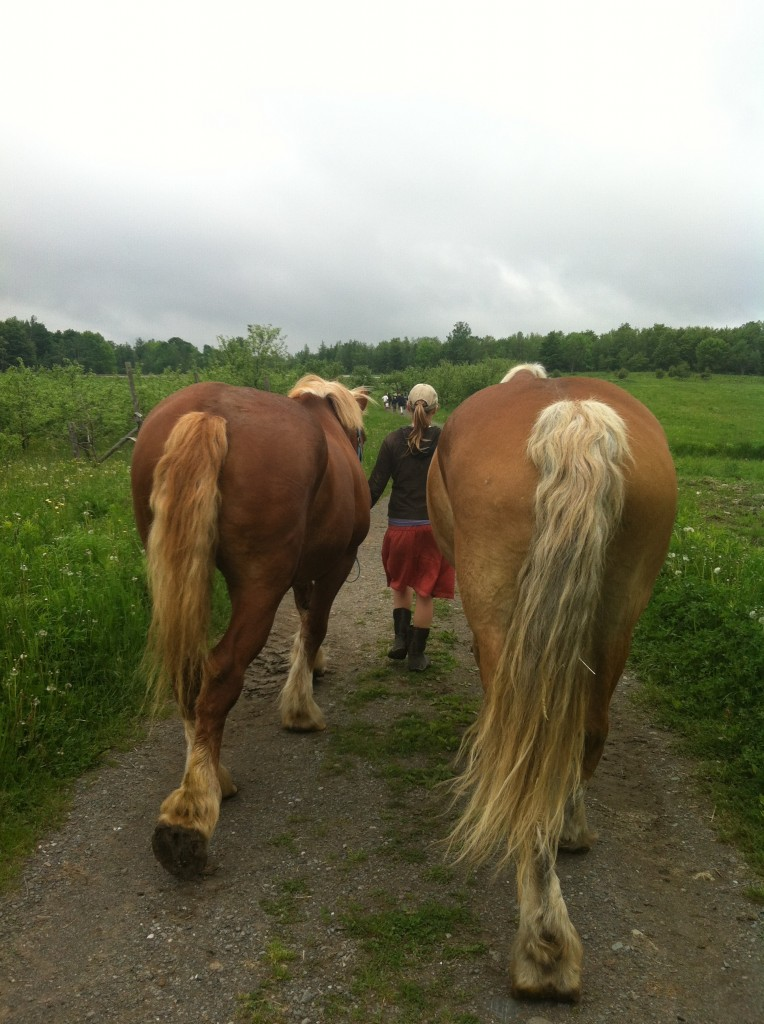 jolianne walking the horses to pasture