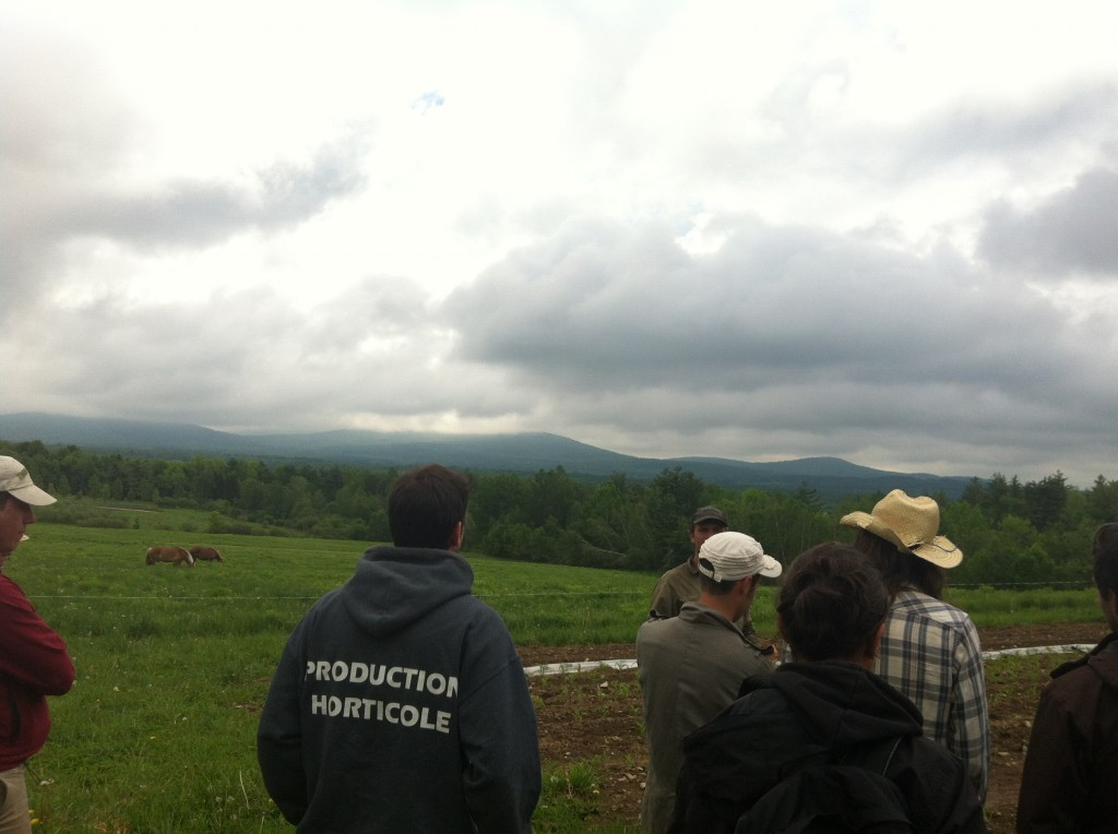 admiring the view of vermont as the horses graze