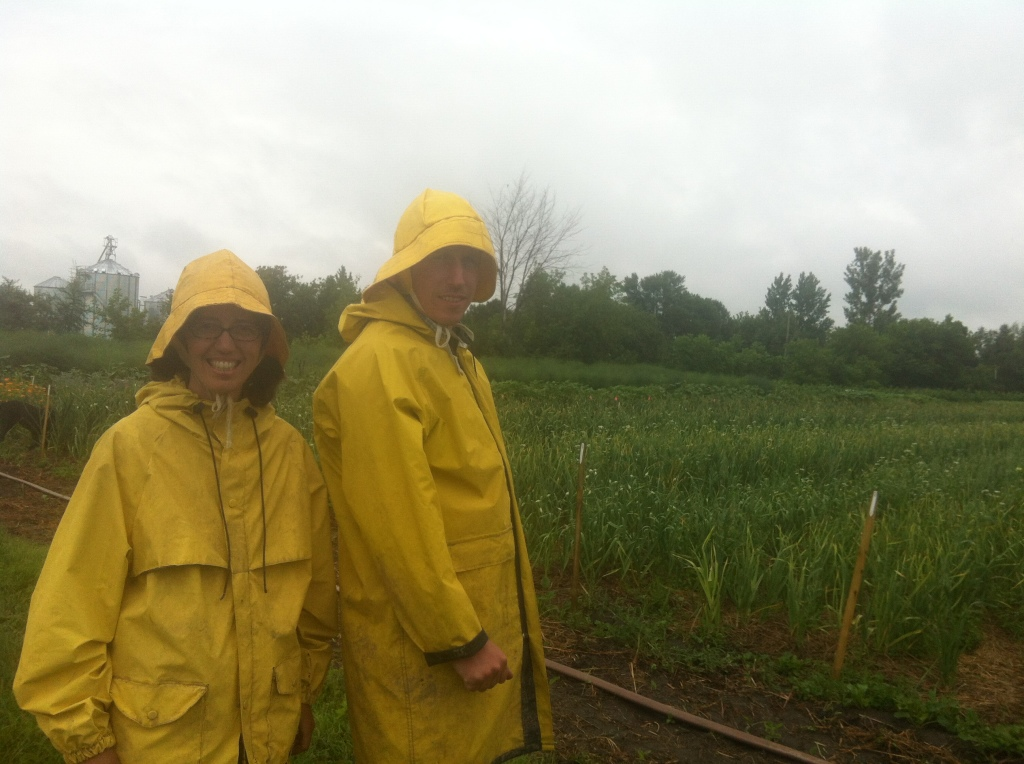 renée and dan admiring the garlic growing on a rainy spring day